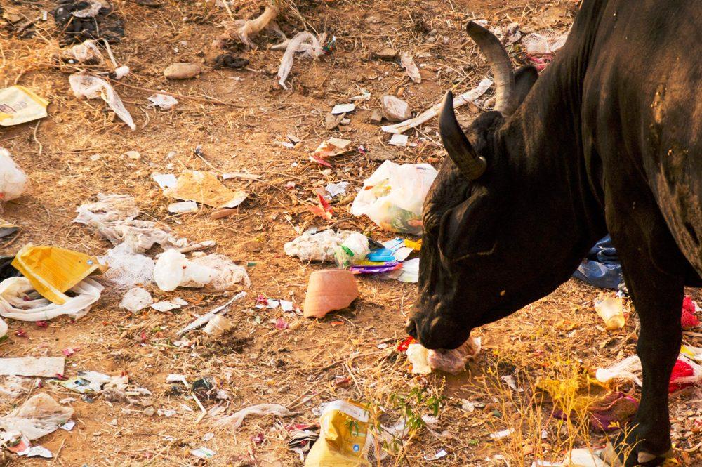 Consiglio UE: vietati oggetti in plastica monouso